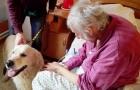 Canisterapeutický pes na návštěvě